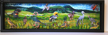 Birds of Wakkerstroom Shadow Box